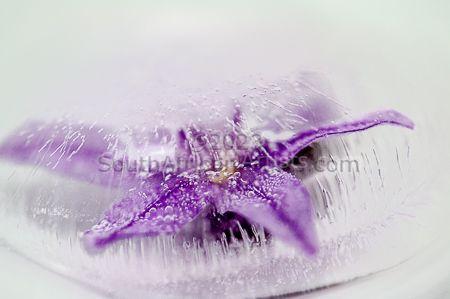 Frozen #11