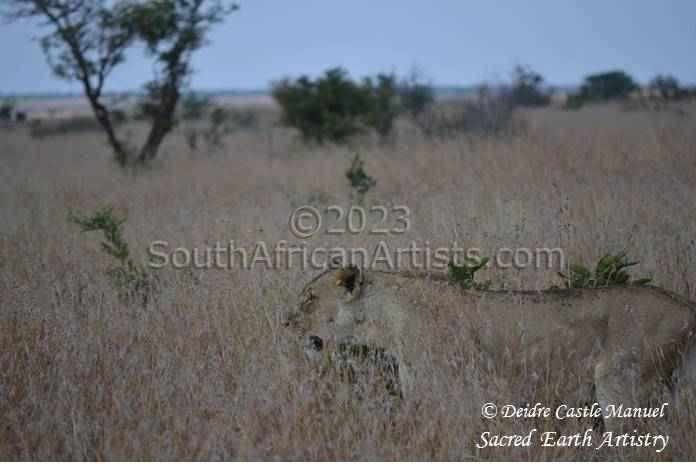 Kruger National Park Lioness Camouflage 02
