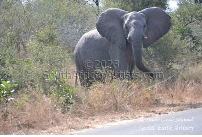 Kruger National Park - Elephant 01