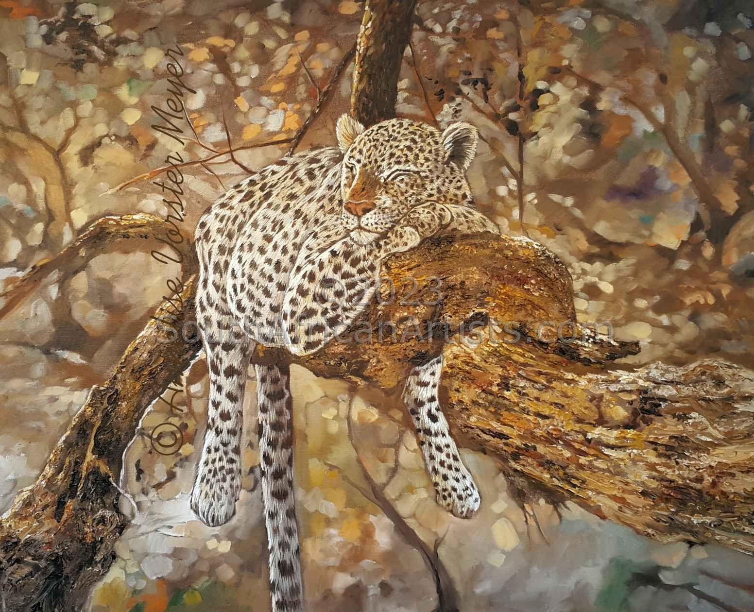 Sleeping African Leopard