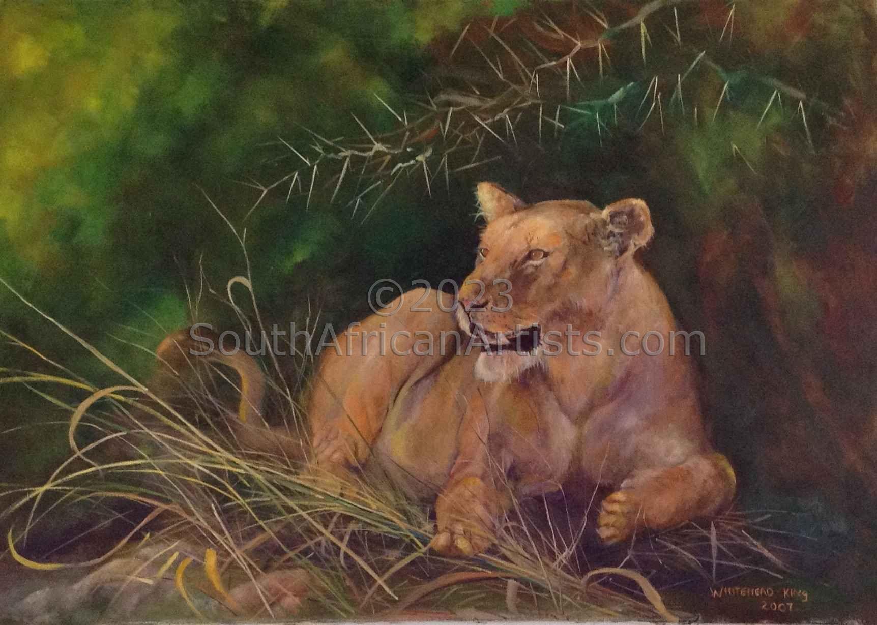 Mana Pools Lioness