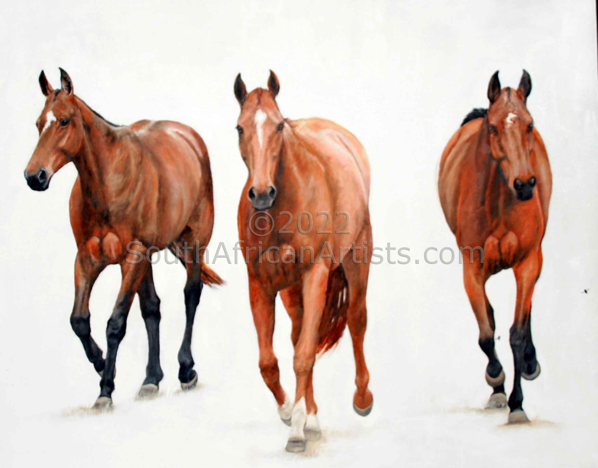 3 Polo Ponies
