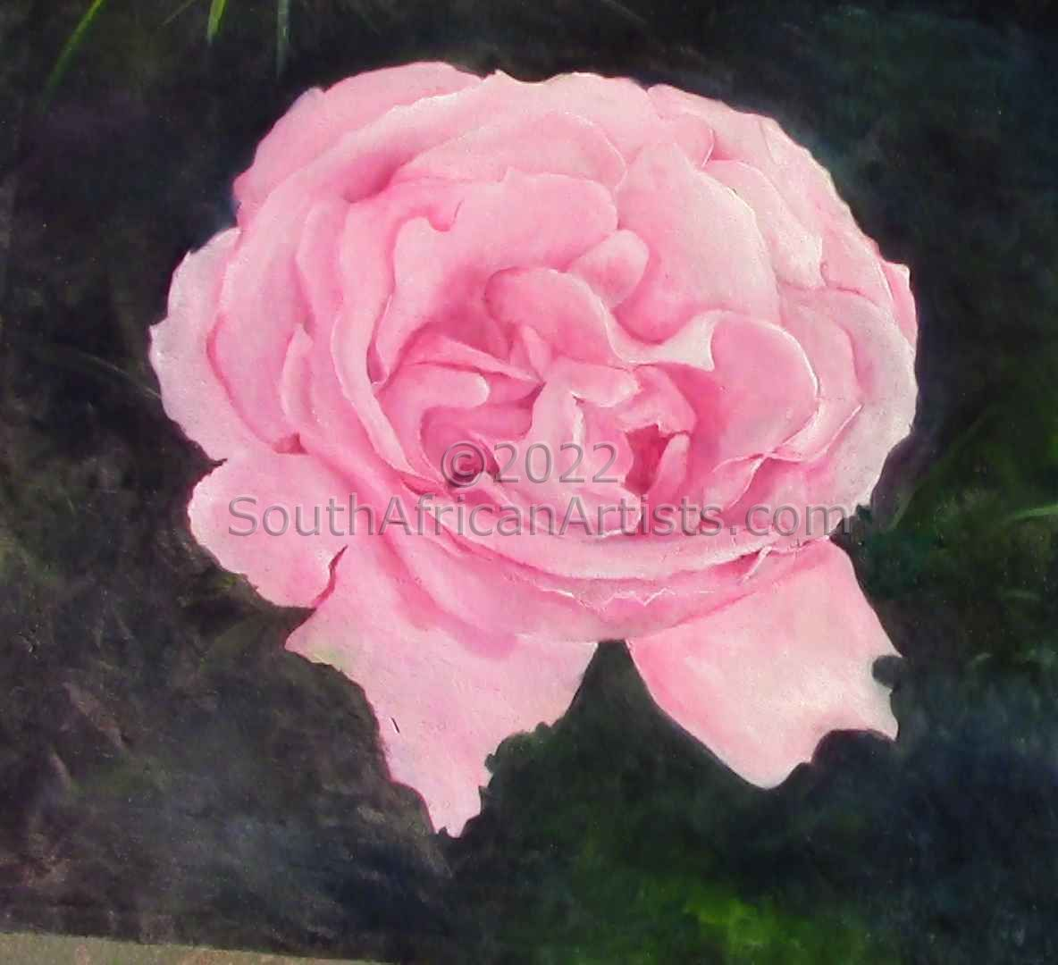 Pink Rose Open