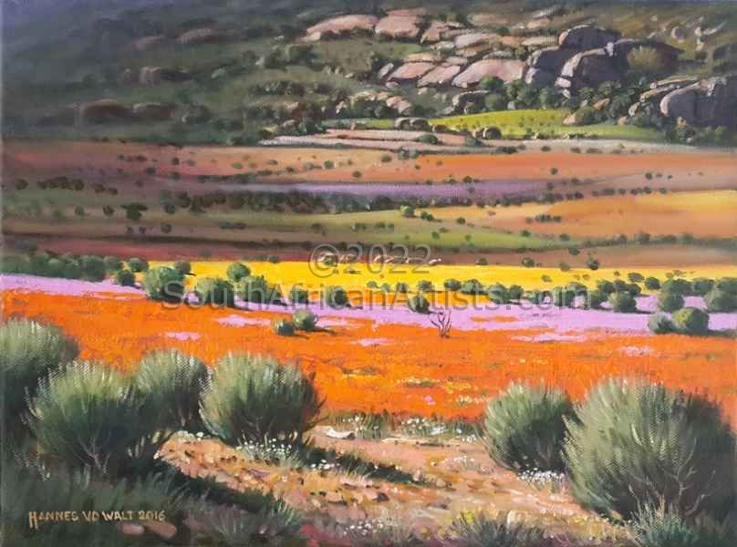 Namaqua Landscape in Full Bloom