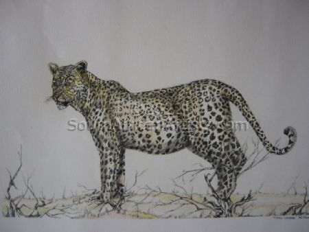 """Tinted Leopard"""