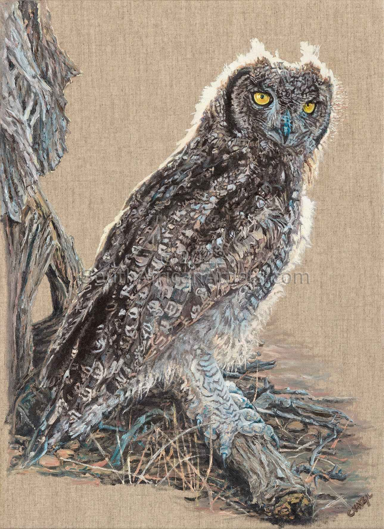 """Golden Light - Spotted Eagle Owl"""