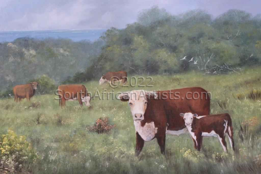 """Cattle farm Port Alfred"""