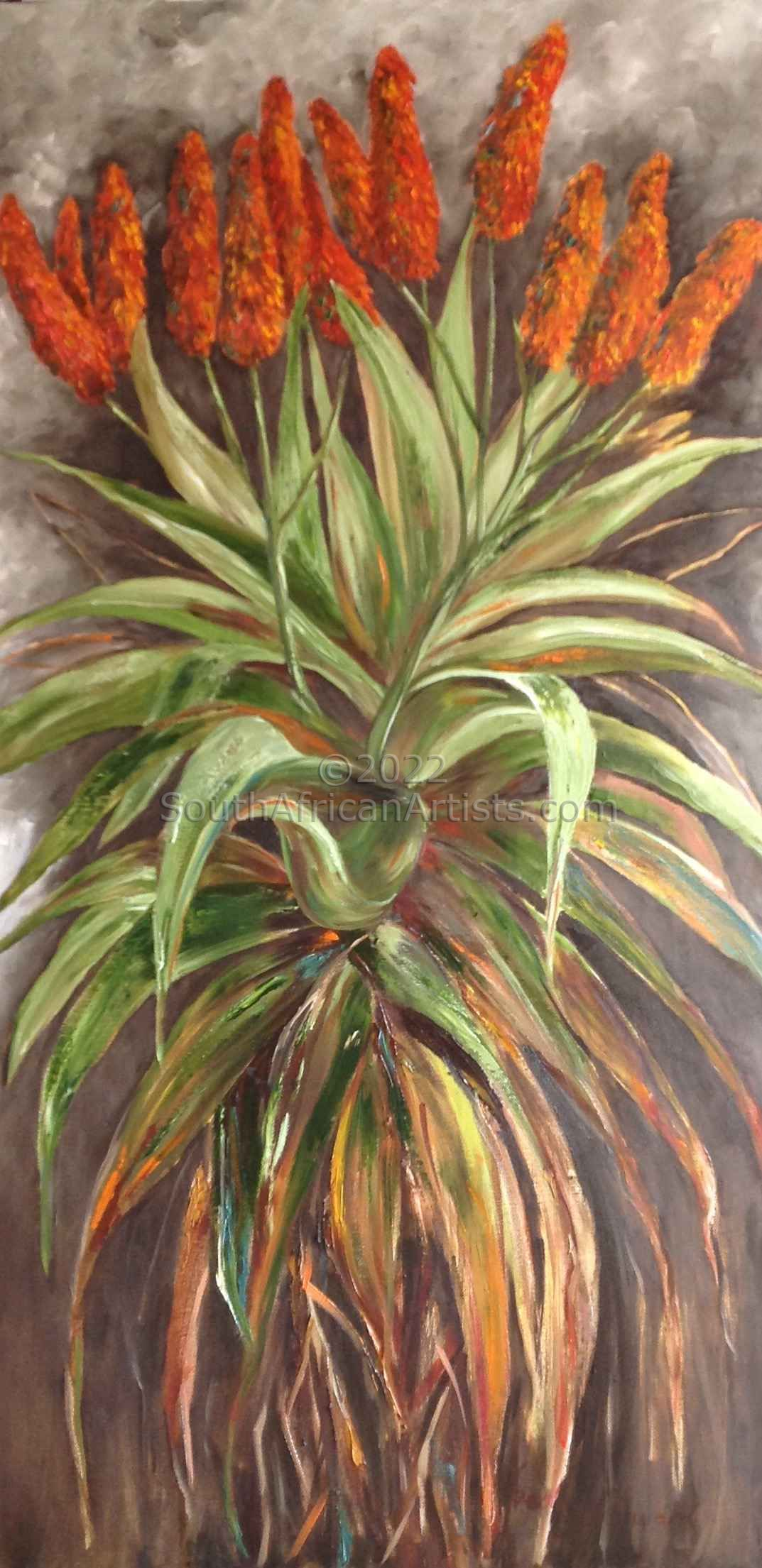 """Aloes 3"""