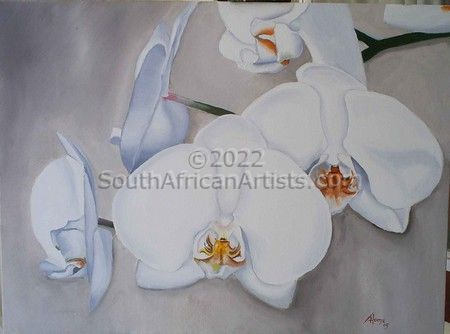"""Moth Orchids"""