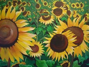 """Sunflower Selection"""