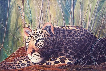 """Leopard Resting"""