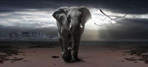 """Elephant in Cape Town"""