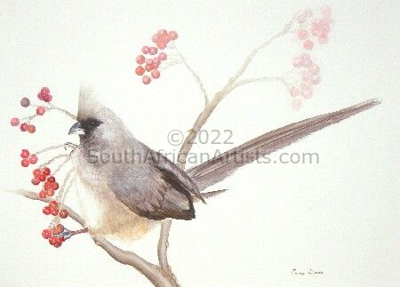 """Speckled Mousebird"""