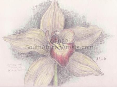 """Orchid sketch"""