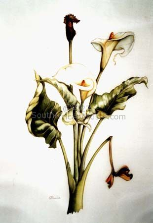 """Arum Lily"""