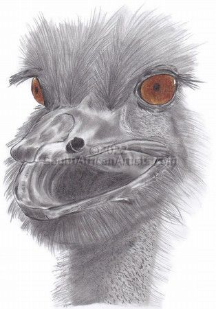 """Ostrich Funny Face"""