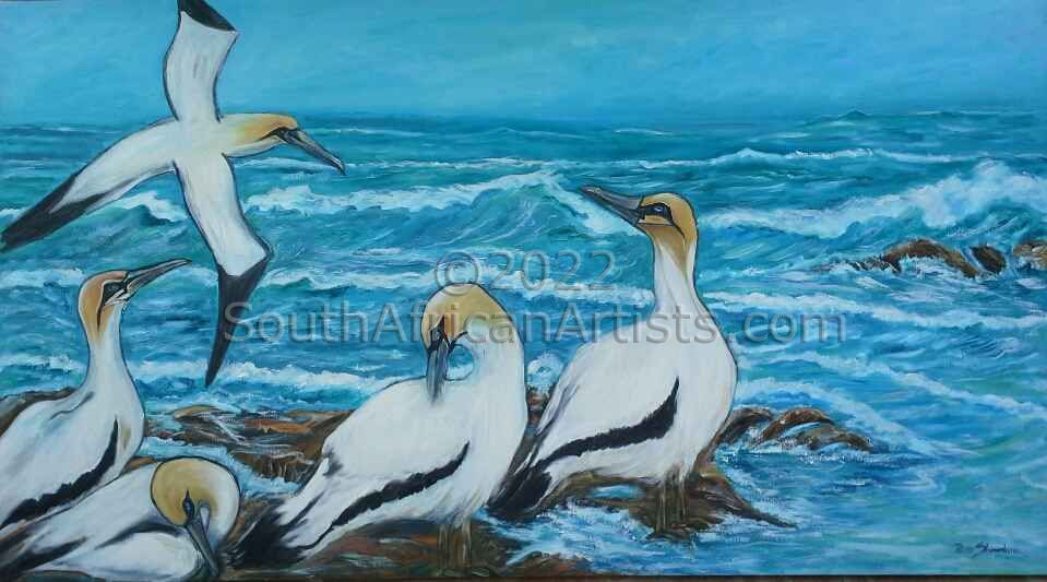 """Cape Gannets"""