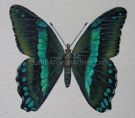 """Green Banded Swallowtail"""