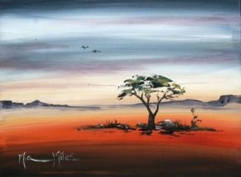 """African Thorntree"""