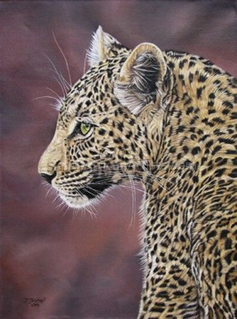 """Young Leopard"""
