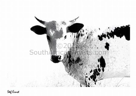 """Nguni Black and White"""