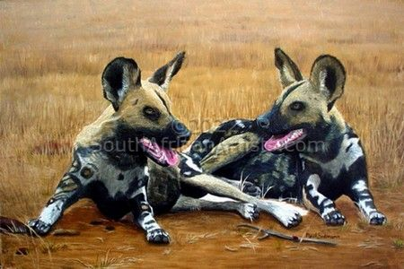 """Wild Dogs/Painted Dogs"""