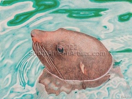 """Hout Bay Seal"""