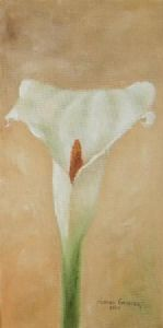 """Arum Lily 1"""