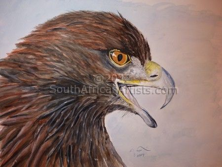 """Brown Eagle"""