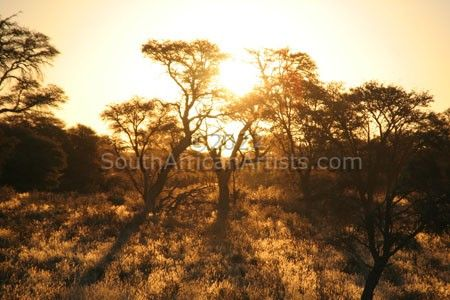 """Kalahari Sunset"""