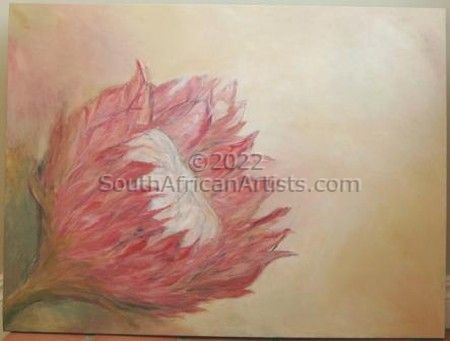 """Protea in morning light"""