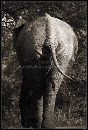 """Wild at Art Collection - Elephant"""