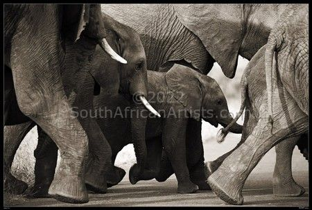 """Wild at Art Collection - Elephants"""
