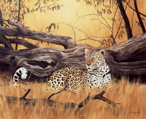 """Leopard at Fallen Tree"""