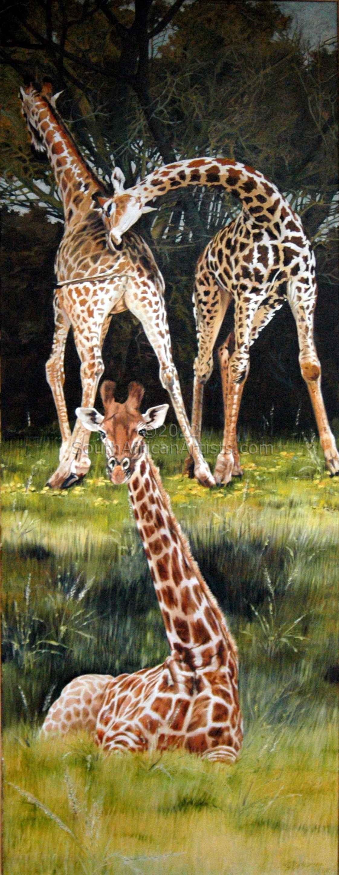 """Three Baby Giraffe"""
