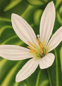 """White Lily"""