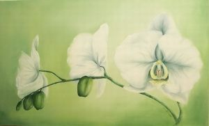 """White Orchid"""