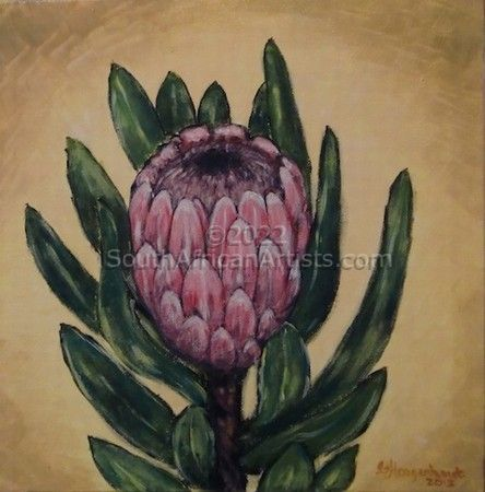 """Protea - Pink"""
