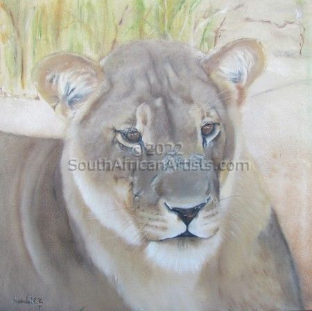 """Kgalaghadi Lioness"""
