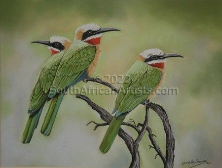 """White Fronted Bee Eaters"""