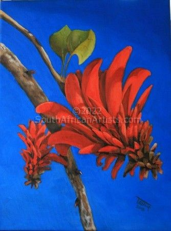 """Coral Tree Flower"""