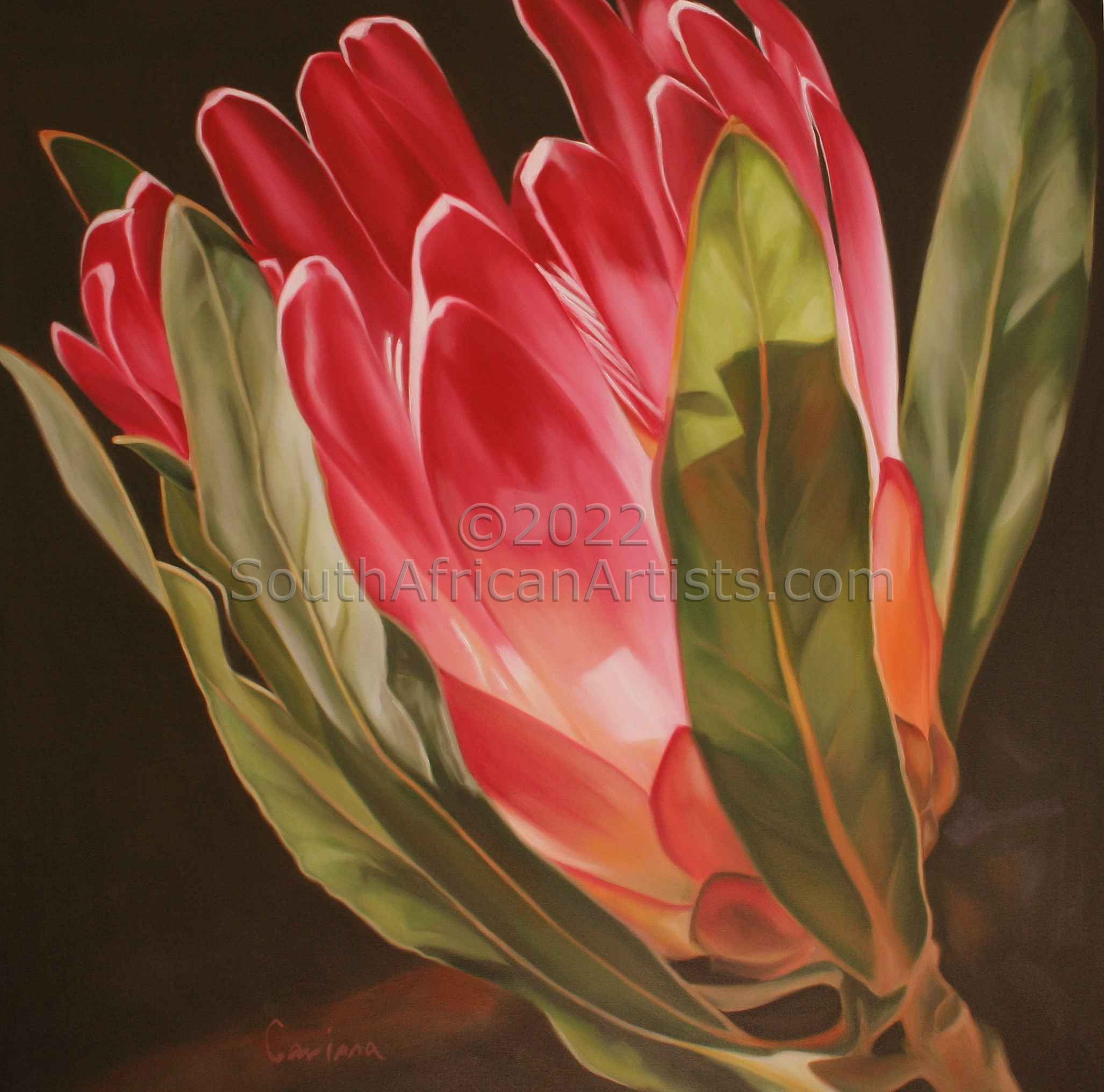 """Protea Pink Play"""