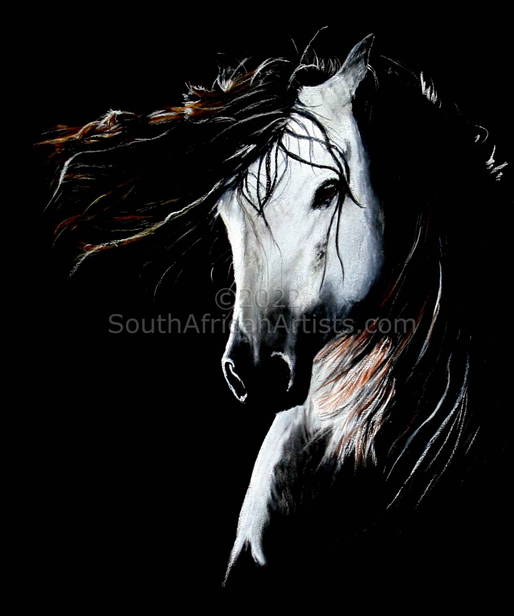 """Horse in  Black and White"""