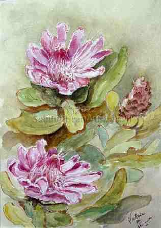 """Pink Proteas"""