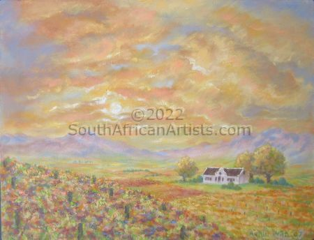 """Sunset over Cape vineyards"""