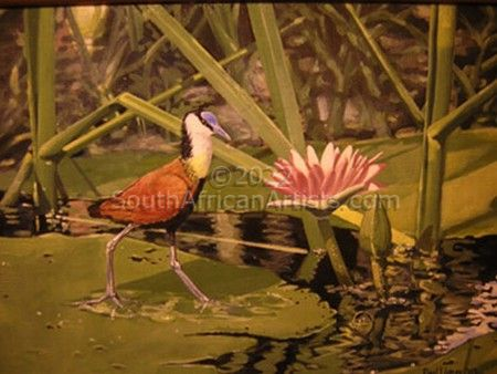 """African Jacana on Lily"""