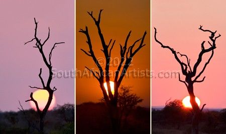 """African Silhouette - Triptych"""
