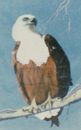 """African Fish Eagle"""